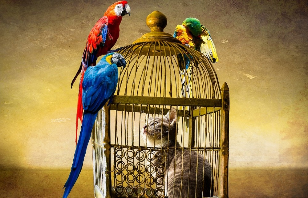 Feline hunter trapped in a cage surrounded by birds