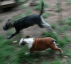 kutyaszállítás Kutyás Janival
