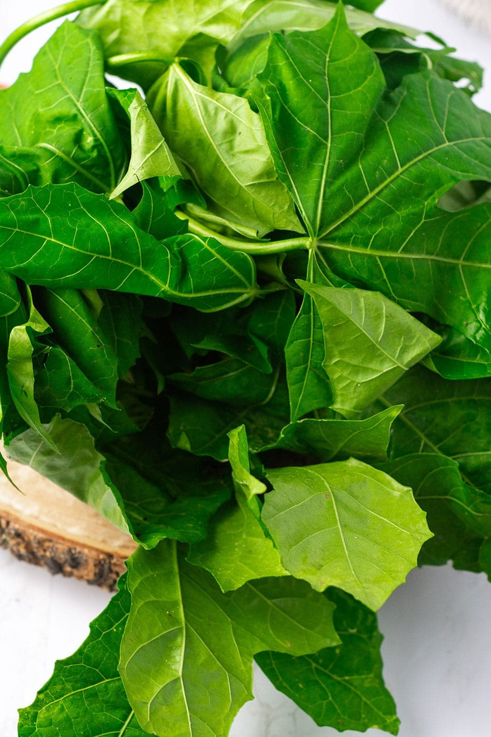 Chaya leaves for steamed chaya -spinach tree