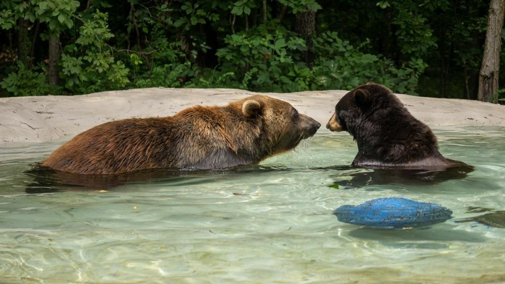 Holli and Huggy Bears