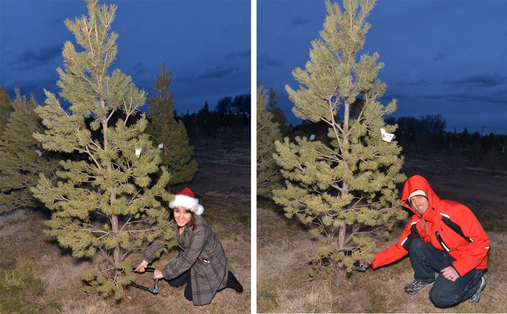 Brooke and Buddy cutting down their first christmas tree during their first christmas in Colorado