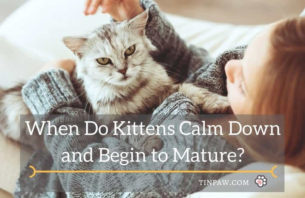 When Do Kittens Calm Down