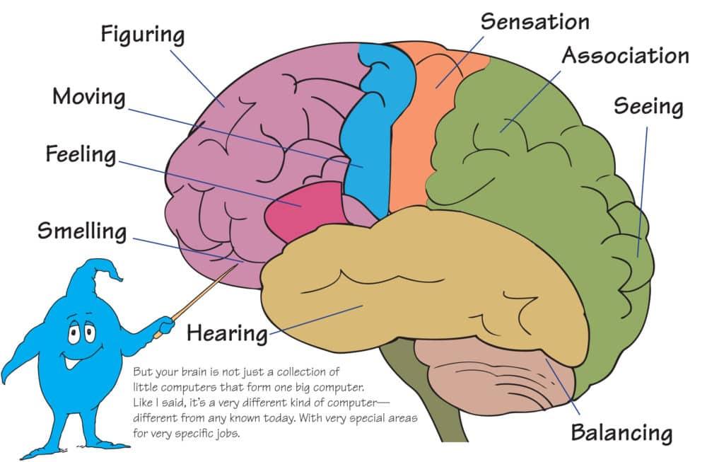 image 1 -brain