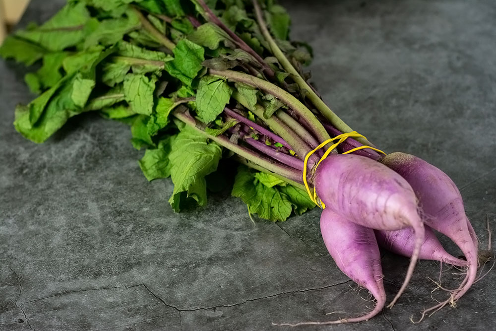 Purple radish plant root and green leaves for making sauteed radish and radish leaves