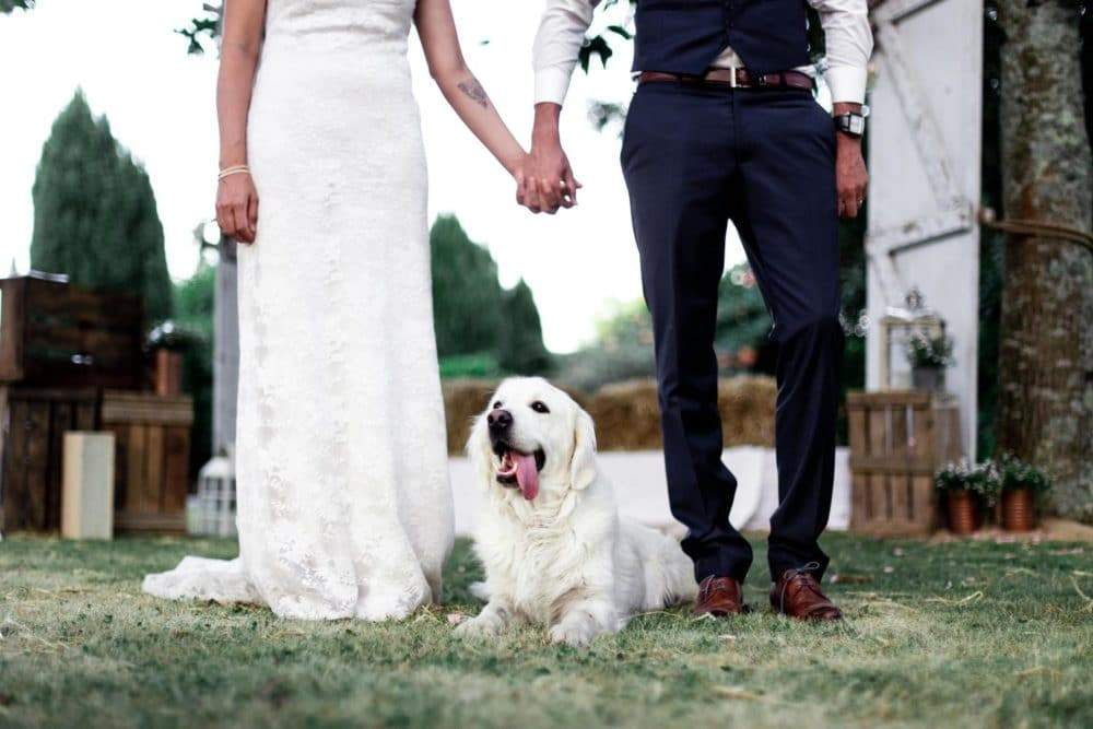 couple chien campagne