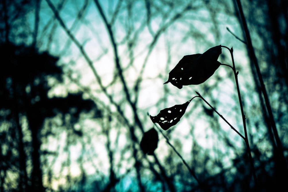 Silhouette Blätter - Naturfotografie