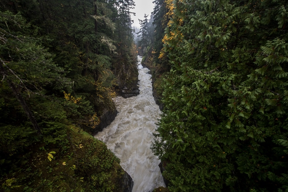 The powerful Vancouver Island waterfall of Englishman River Falls flowing through a heavily treed canyon
