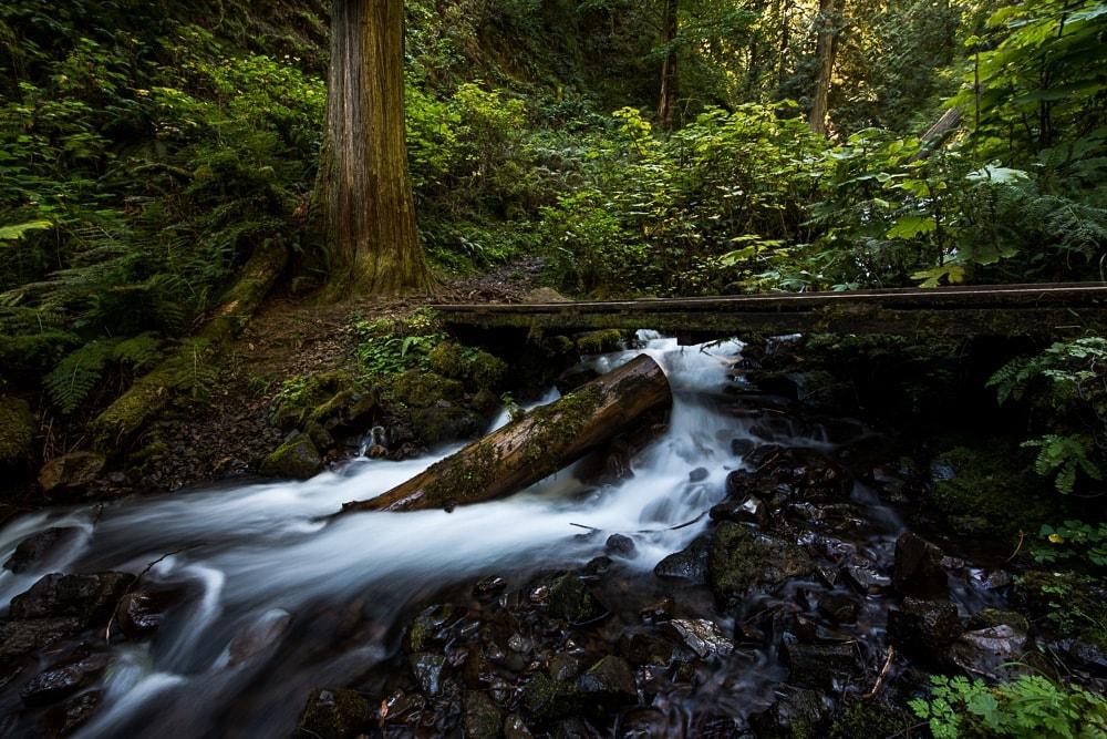 Wooden bridge crossing the stream and mini waterfall headed back towards Multnomah Falls