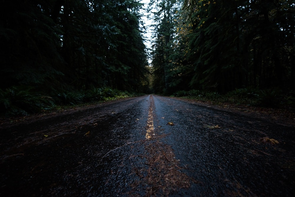 Wet road in Olympic National Park, Washington