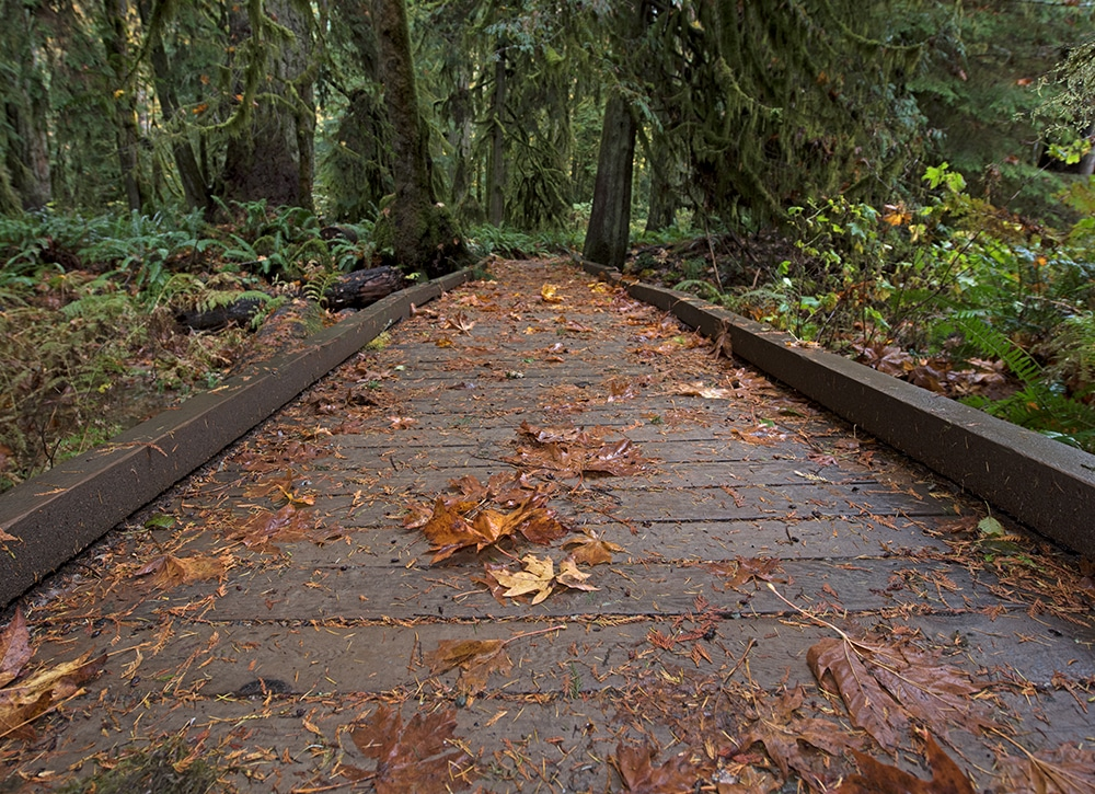 Leaves on a boardwalk trail in mcmillian park