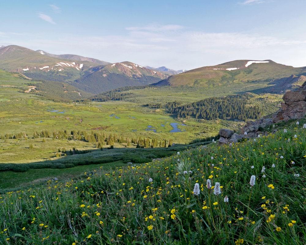 Spring flowers growing on the side of Mt. Bierstadt