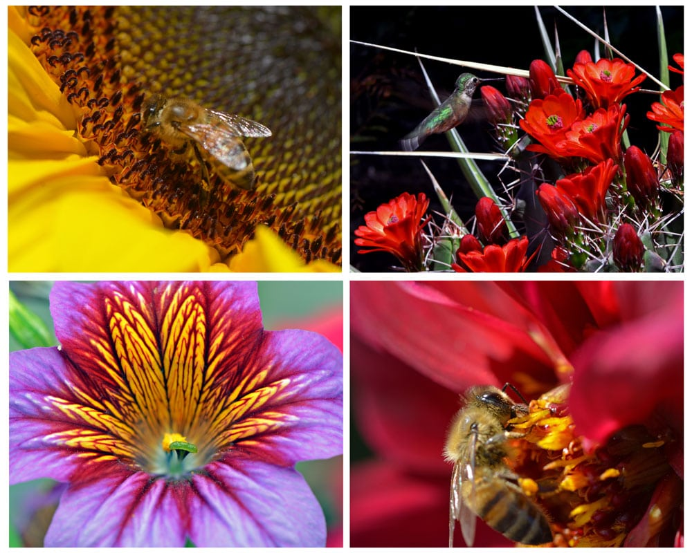 Some of the flowers and nature that can be seen at the Denver Botanic Gardens