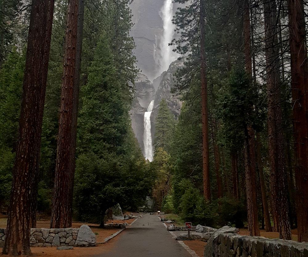 Tree lined path headed towards Yosemite Falls