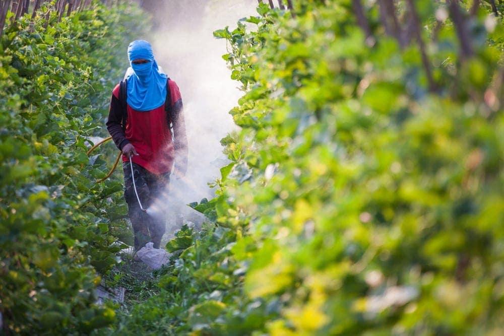 Pesticidas estando rociado