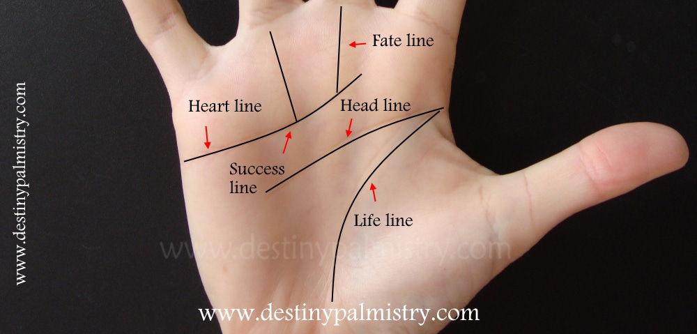 palmistry line, success line, fate line