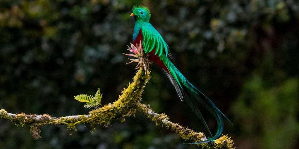 The quetzal