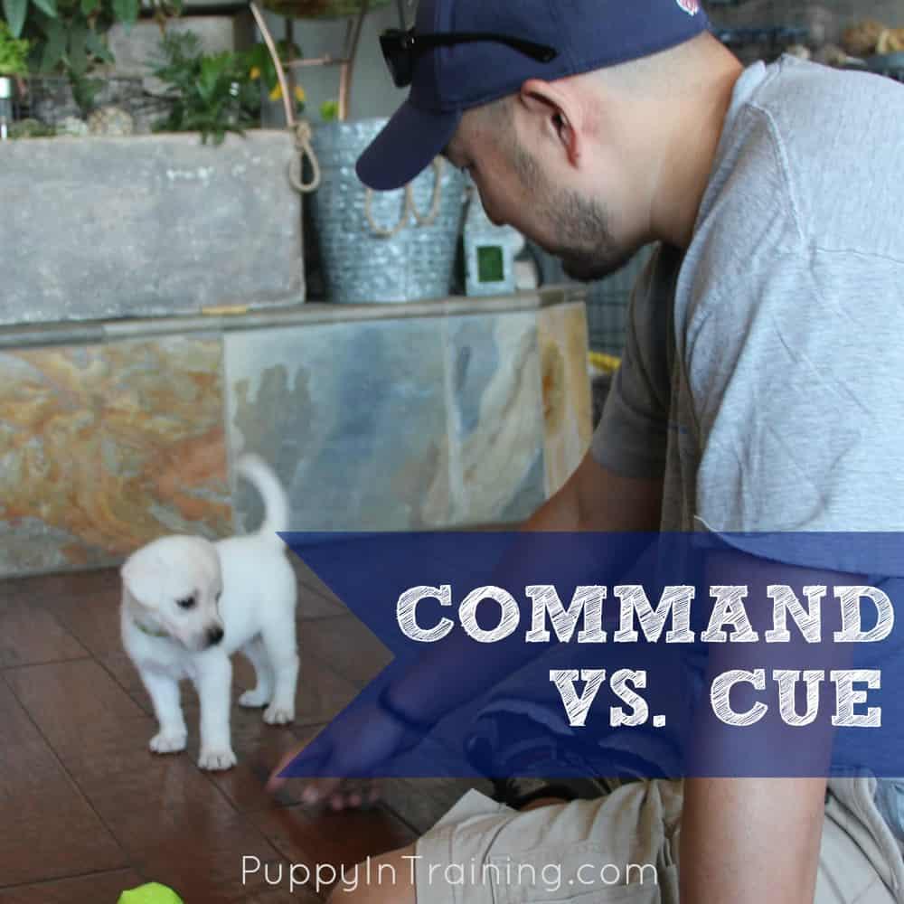 Command vs Cue