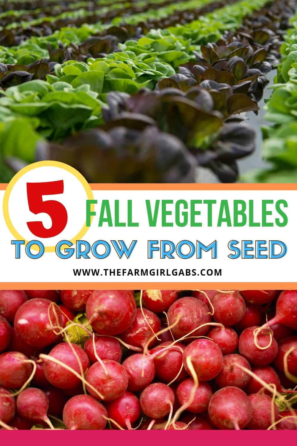 Fall is the perfect time to enjoy some vegetables from your garden. Here are five easy fall vegetables to grow from seed. #gardeningtips #fallgardening #gardenideas