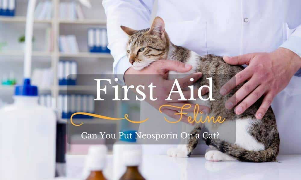 Feline First Aid: Can You Put Neosporin On a Cat?