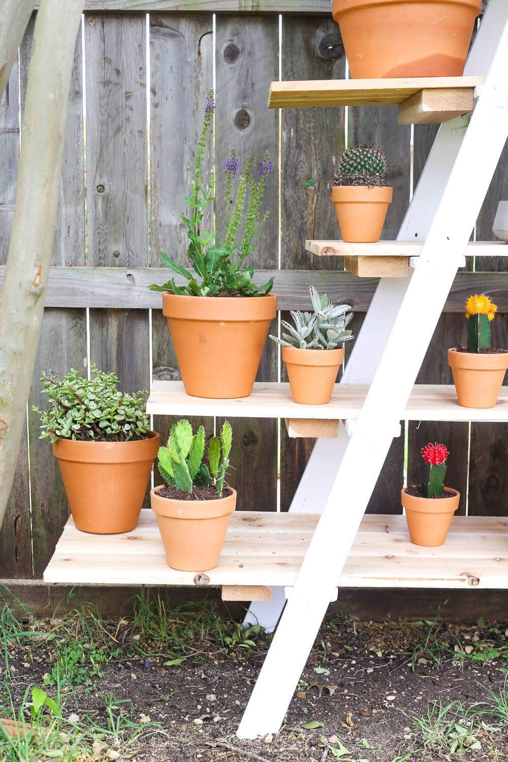How to turn a ladder into a DIY tiered plant stand