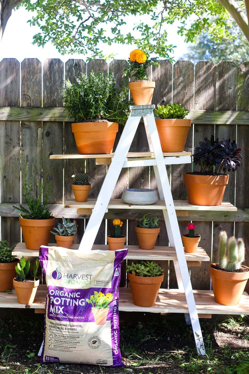 DIY tiered plant stand with Harvest Soil