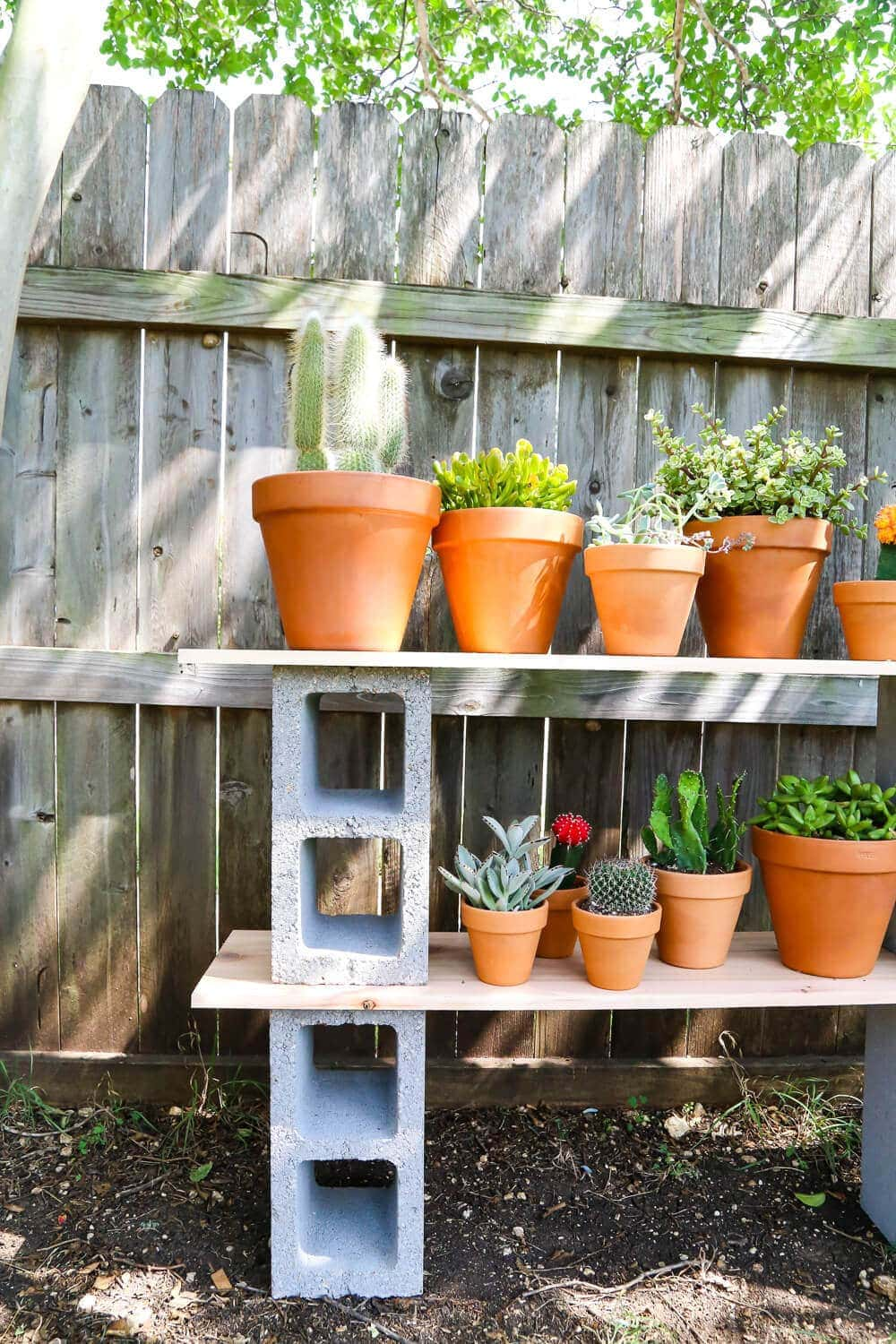 Cinder block shelves with plants