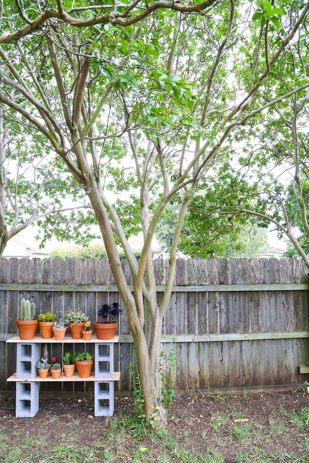cinder block shelves with plants next to a fence