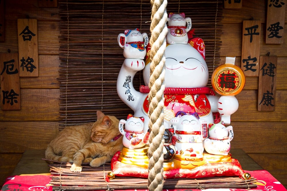 Houtong Cat Village, a popular Taipei day trip on the Pingxi railway line