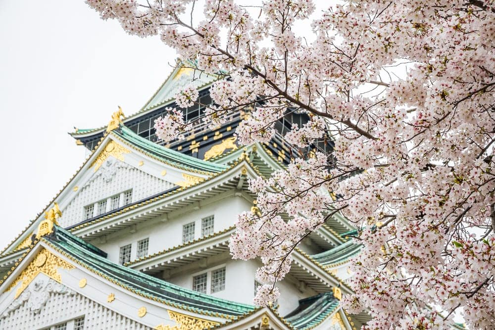 Osaka Castle, one of the best places to see cherry blossoms in Osaka