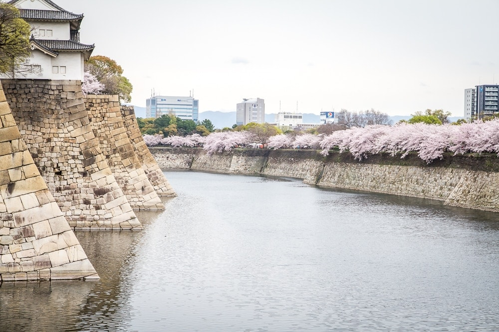 Osaka castle moat with cherry blossoms