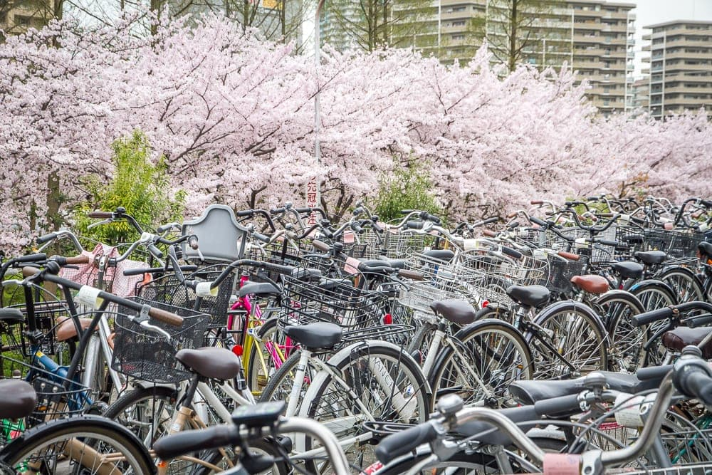Bikes and cherry blossoms in Osaka