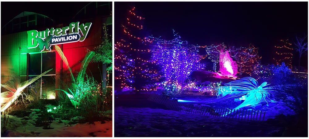 The Butterfly Pavilion Living Lights event during Christmas
