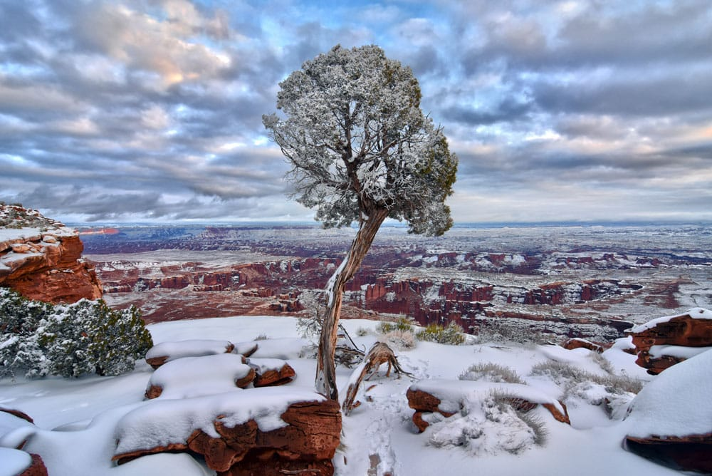Single Tree on the cliff covered in snow at Grand View Point in Canyonlands in winter