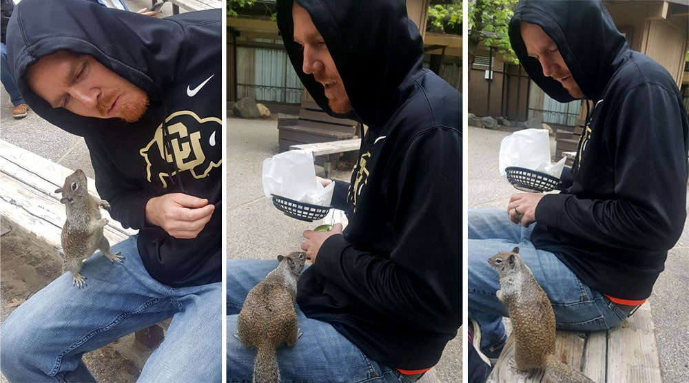 The squirrels around the cafeteria in Yosemite will come and steal your food, and climb on you