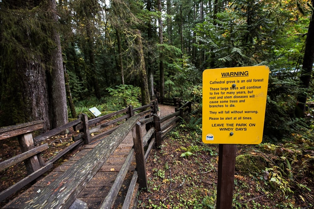 Warning sign at Cathedral Grove about windy days.