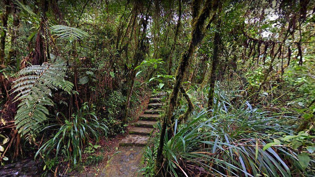 Vegetación exuberante en el Biotopo del Quetzal