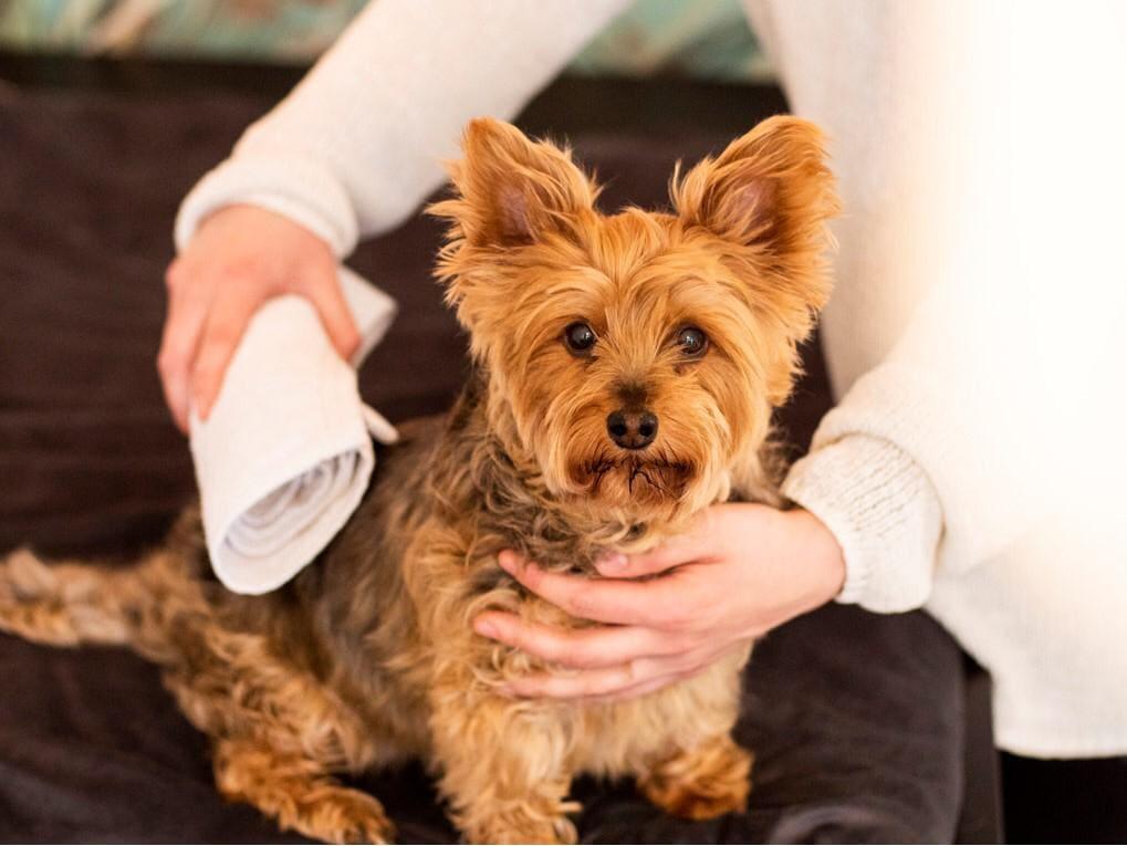 Gesunder Hund: Lerne alles über die gesunde Haltung deines Vierbeiners