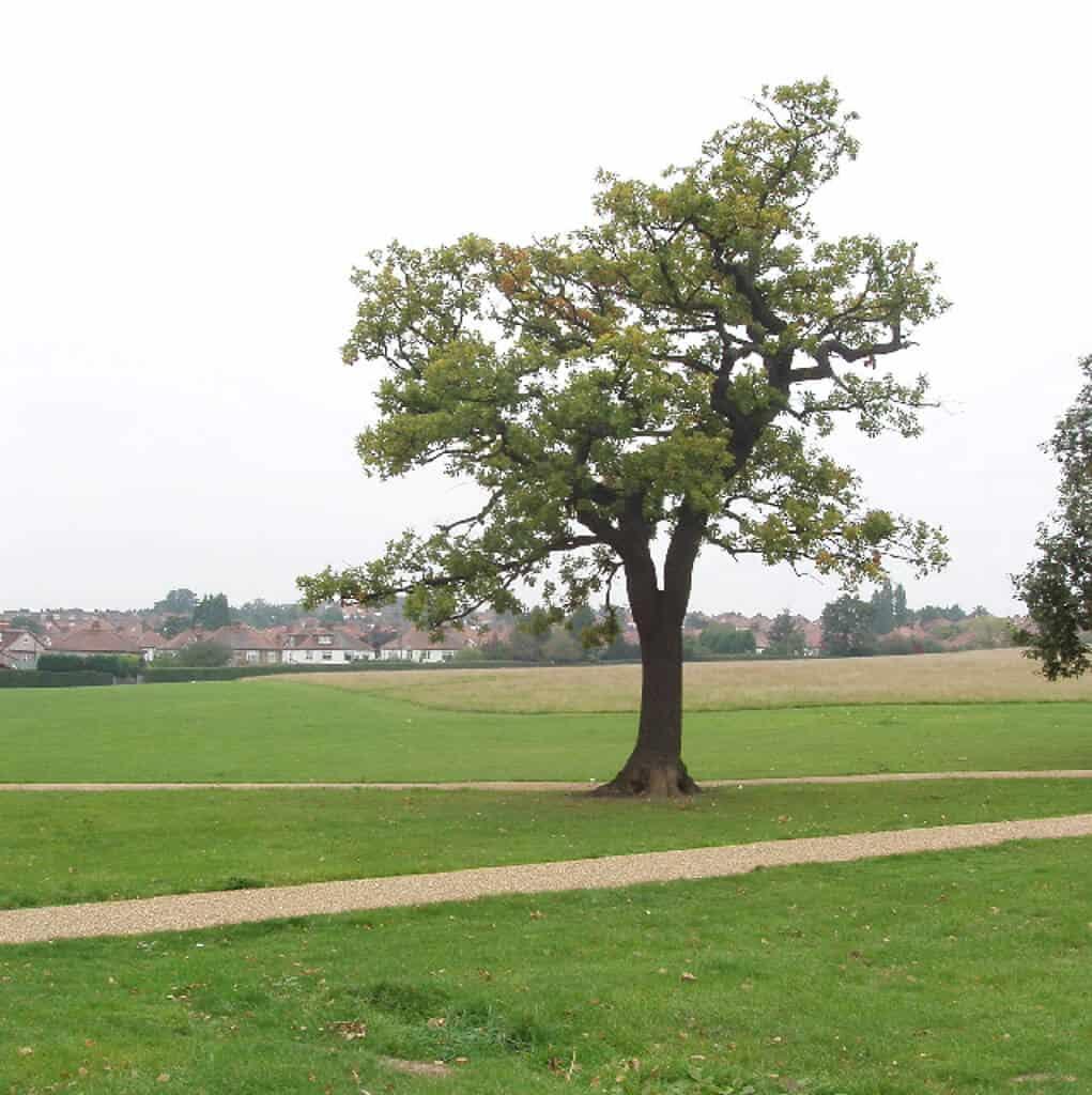 Gladstone Park