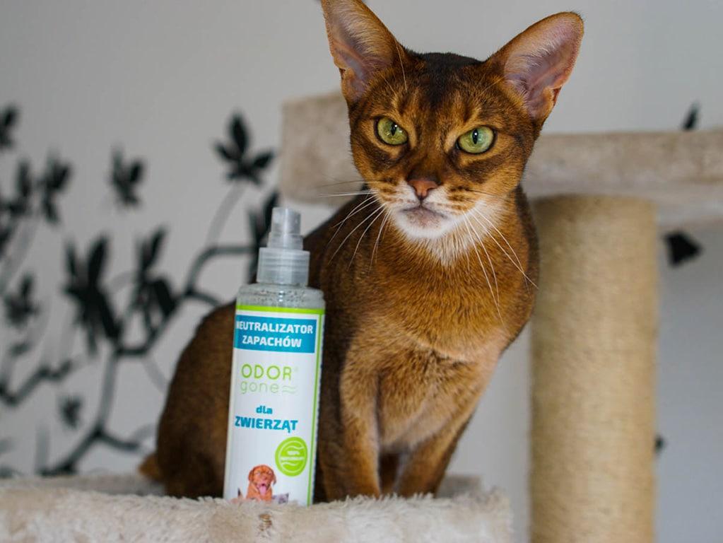 glowne - OdorGone - neutralizator zapachów kota