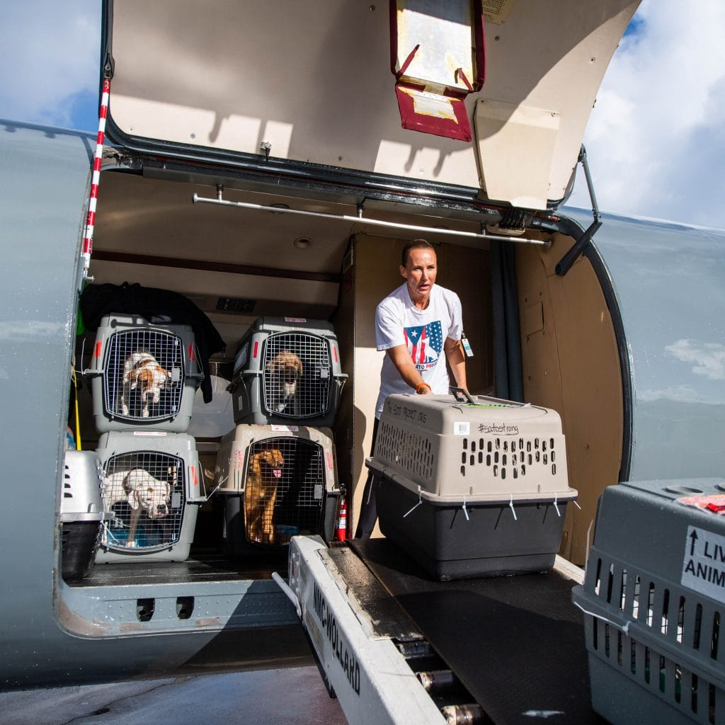 Image: Chrissy Beckles helping load pups into the plane to head off the island