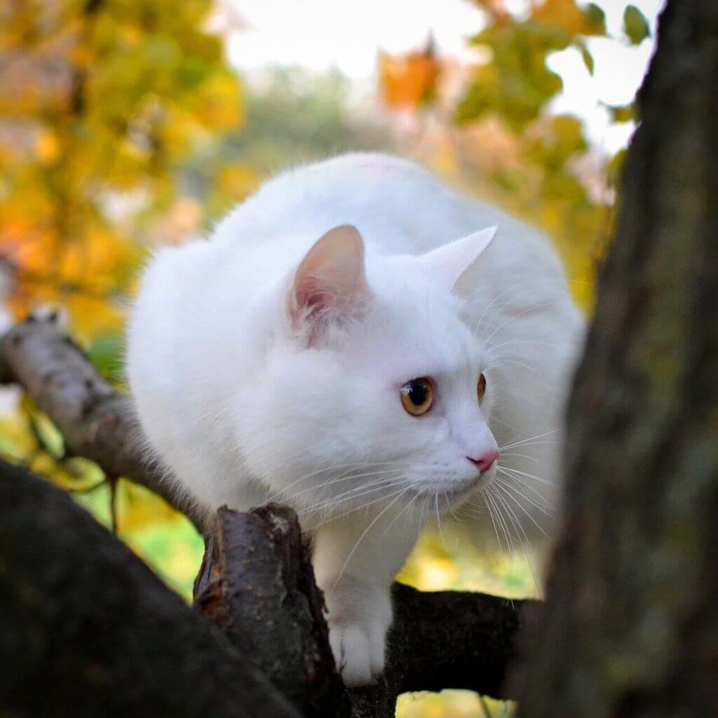 arbre à chat plafond