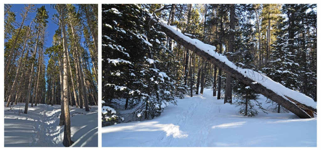 Some of the deep snow on the tree lined trail during our Christmas day Bierstadt Lake Hike