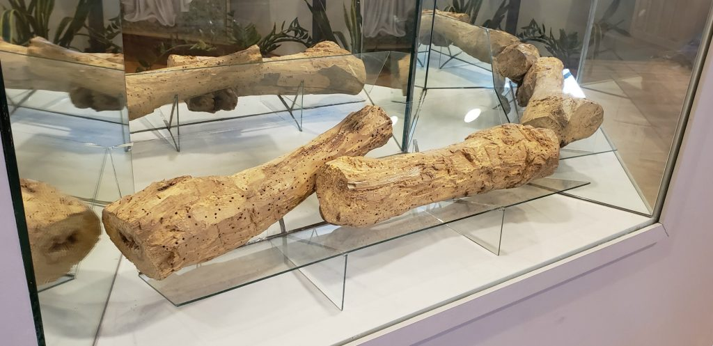 two stumps of worm-hole wood sit on glass shelve with surrounding mirrors at National Shrine of Our Lady of Good Help