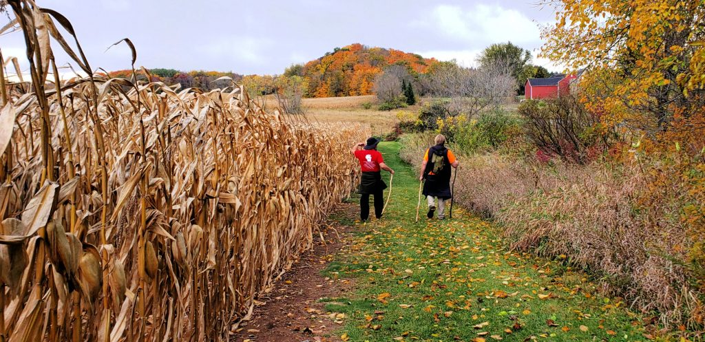 two men walk on green grass pathway with cornfields to the left. Cone-shaped mountain in fall colors rises from the horizon on the Ice Age Trail Holy Hill section