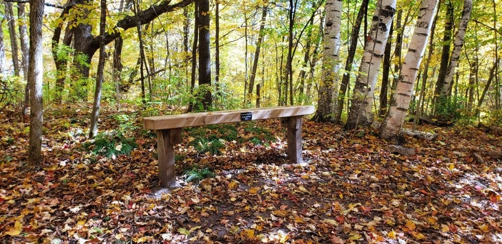 bench in the silent forest is a special place to contemplate God's creation on the WI pilgrimage