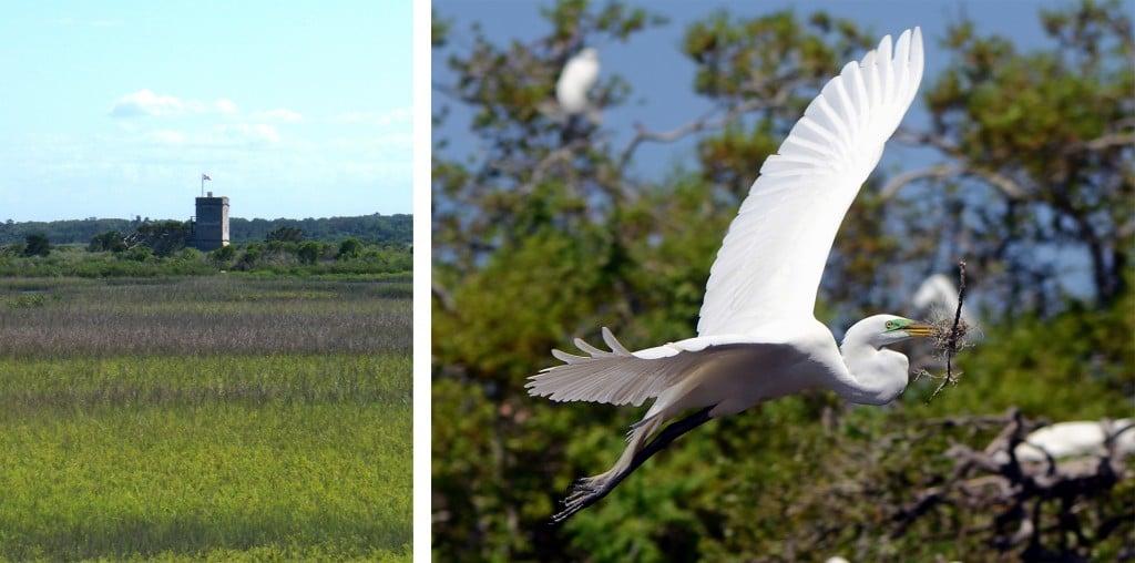 Fort Matanzas and egret nesting
