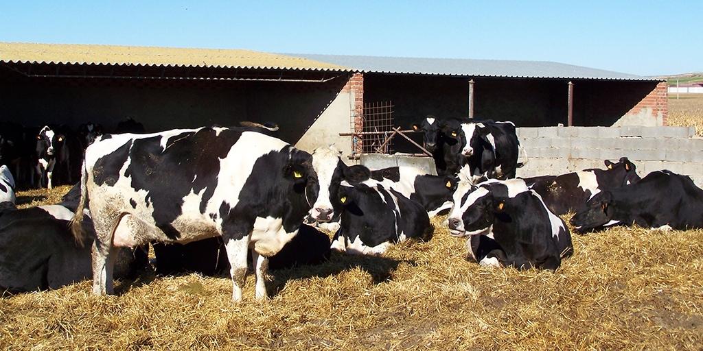 Asaja exige a la industria láctea que suba el precio la leche