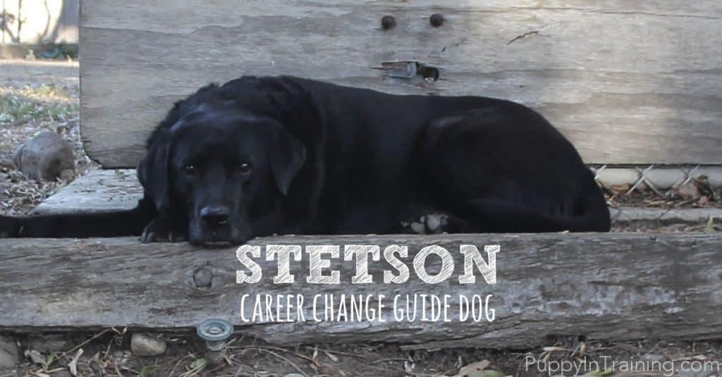 Stetson, career change guide dog