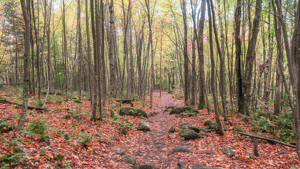 Wooded hiking trail with colorful leaves all over the ground in Vermont