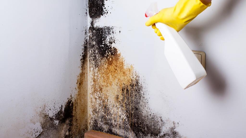 Schimmel an der Wand Schimmelbeseitigung Putzen - Schimmel an der Wand – Ursachen, Vorbeugung und Schimmelbeseitigung
